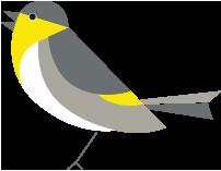 Serin bird